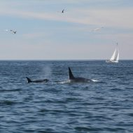 Check out Year-Round Whale Watching in Monterey Bay
